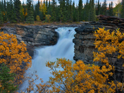 Athabasca Autumn