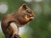 Squirrel Zen