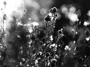 des fleurs noir et blanc