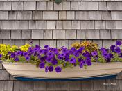 Boatload of Flowers