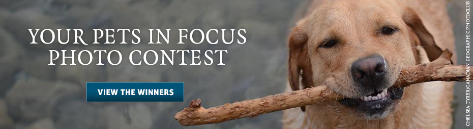 Your Pets in Focus Photo Contest - View the Winners