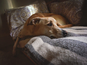 Meditations of a Dog