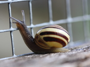5a. Snail in jail