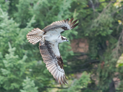 Powerful Flight