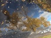 Watery Fall