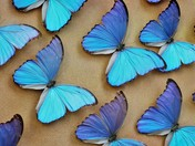 beatiful butterflies