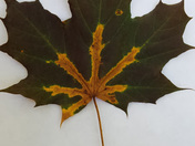 Unique Leaf