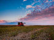 Harvest Time on the Prairies