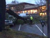 Large tree limb laying across Main Street Burlington