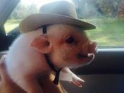 Penelope Pig At Halloween