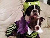 Franken Bugsy and Dracu Bianca
