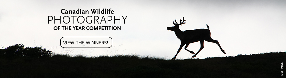 Canadian Wildlife Photography of the Year Winners