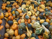Gourd's