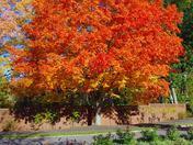 Fall Foliage @ Sheffield Heights, Saugus, Mass.