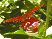 Pictures from my Paris Mt. garden