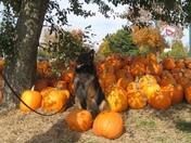 Birthday Boy Blu in the Pumpkin Pile
