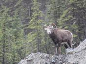 I drive to Alaska to work every summer. Here are some of the pictures from those