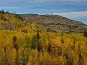 An Aspen Autumn