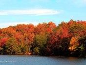 Fall Pic's