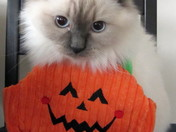 Halloween For Kitty