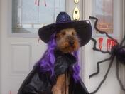 Mr. Codi does Halloween