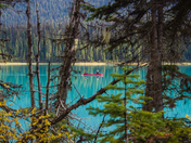 Autumn suit you well, Canoe / Emerald Lake in Yoho National Park