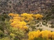 Canyon Gold