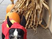 Russell ready to trick or treat