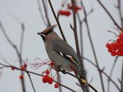 Bird lunching on mountain