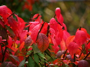 """""""The Changing Colors of the Leaves"""""""