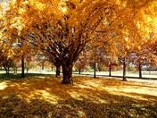 Sunday morning In Elmwood park
