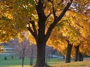 Benson Park Trees