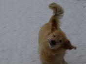 Rhett Shaking Off The Snow