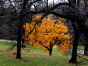 last colorful tree......................hanscom park