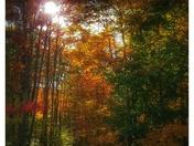 Sun shining thru the fall leaves