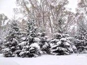 First Snowfall November 21, 2015
