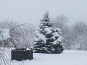 Snowy pic!