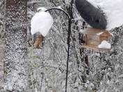 Magical snowfall