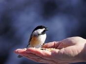 A bird in the hand….