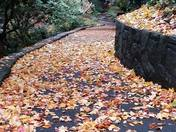 follow the yellow leaf road : )