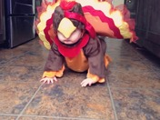 Our Thanksgiving Turkey is Trying to Escape!