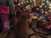 Both catsunder the Christmas tree