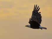 Eagle's Eve