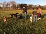Overlook Dog Park Fun