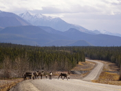 Rush Hour on the Alcan.