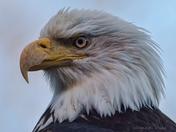 Messy Beak
