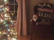 Marshmallow taking a break from making toys for Santa