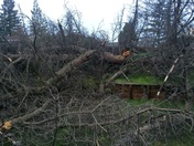 65' pine fell and missed the house