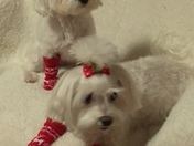 Pixie & Chicklet Korte