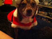 this is tearre dressed in Santa outfit
